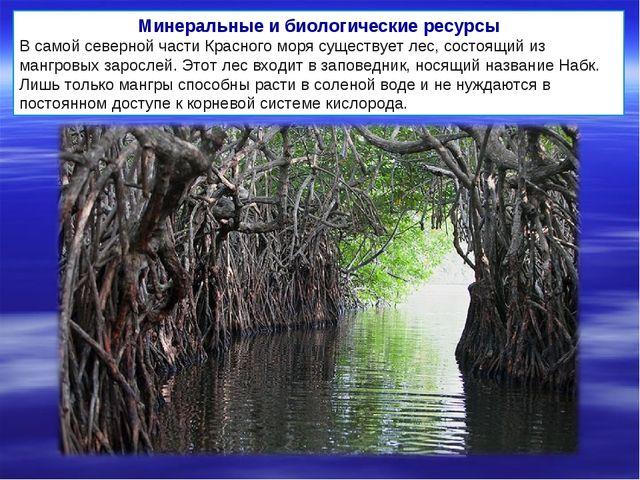 Минеральные и биологические ресурсы В самой северной части Красного моря суще...