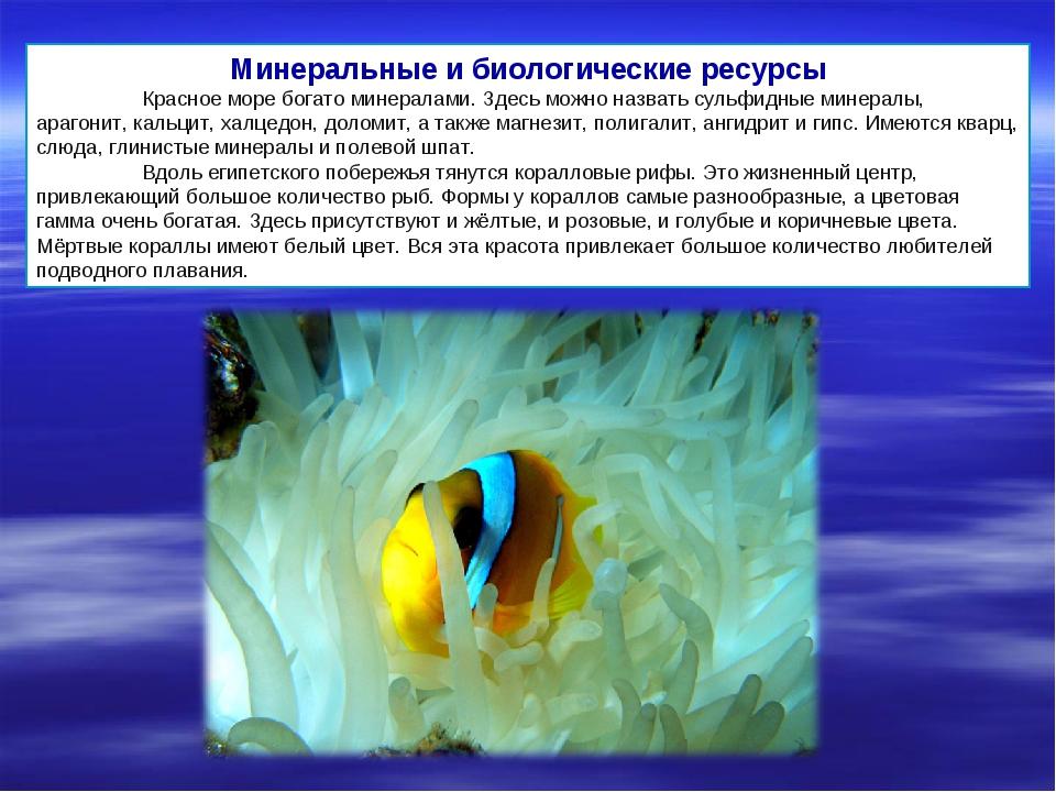 Минеральные и биологические ресурсы Красное море богато минералами. Здесь мо...
