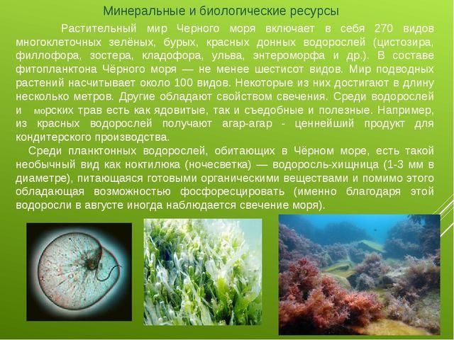 Минеральные и биологические ресурсы  Растительный мир Черного моря включае...