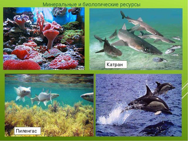 Минеральные и биологические ресурсы   Пиленгас Катран