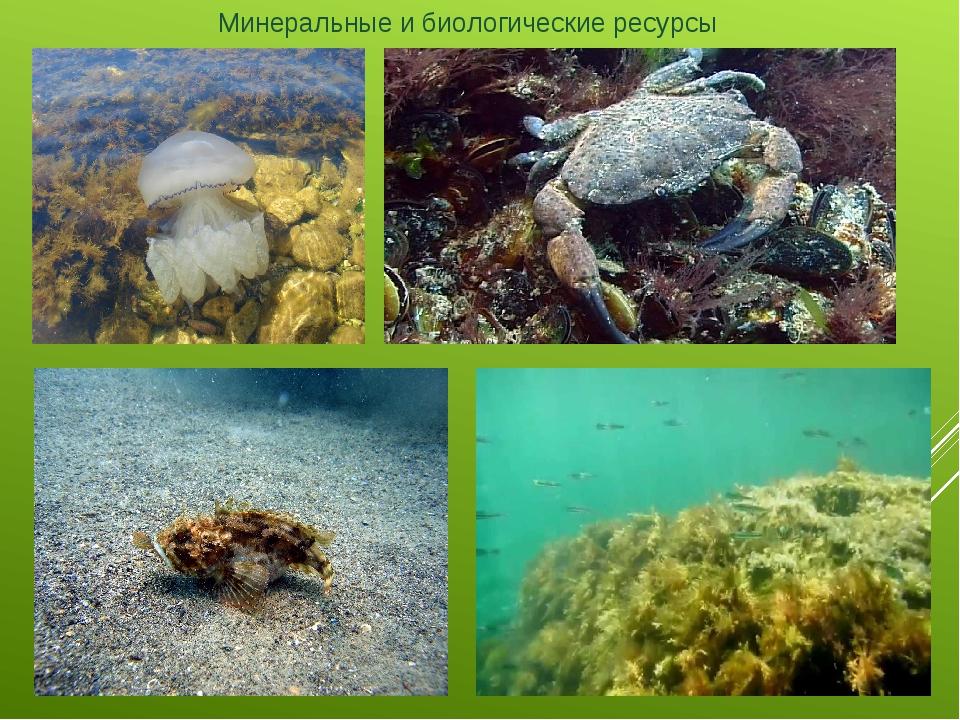 Минеральные и биологические ресурсы