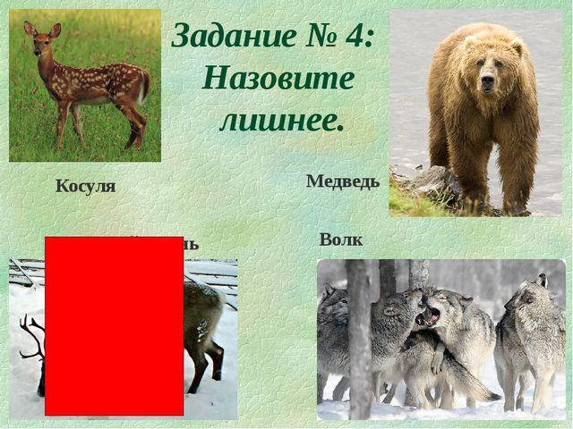 Задание № 4: Назовите лишнее. Косуля Волк Северный олень Медведь