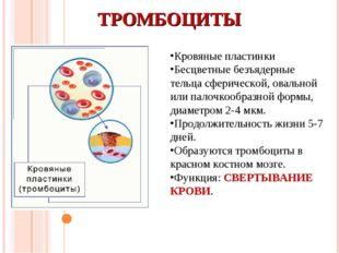 ТРОМБОЦИТЫ Кровяные пластинки Бесцветные безъядерные тельца сферической, овал