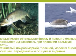 1.Тело рыб имеет обтекаемую форму и покрыто слизью, что позволяет им развиват