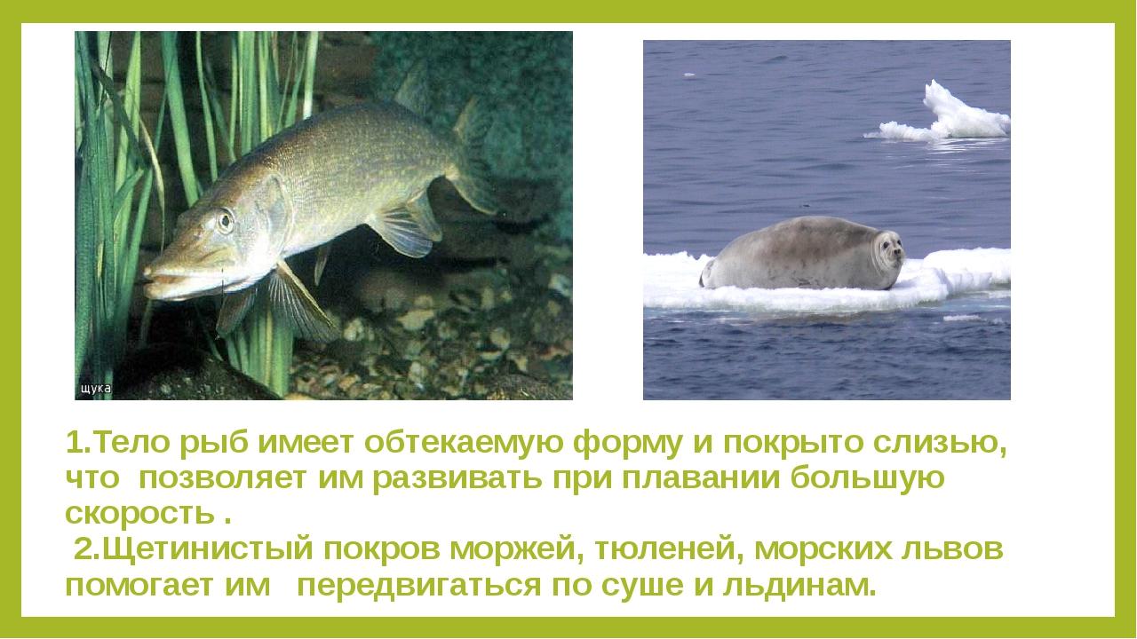 1.Тело рыб имеет обтекаемую форму и покрыто слизью, что позволяет им развиват...