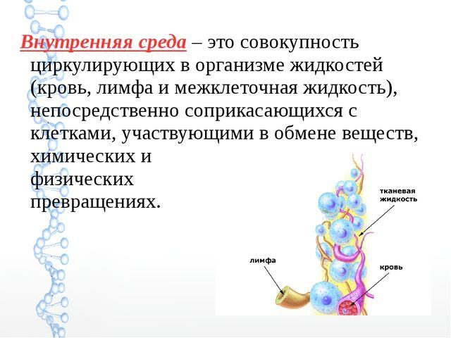 Внутренняя среда – это совокупность циркулирующих в организме жидкостей (кров...