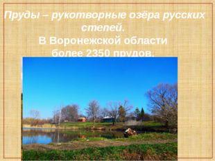 Пруды – рукотворные озёра русских степей. В Воронежской области более 2350 пр