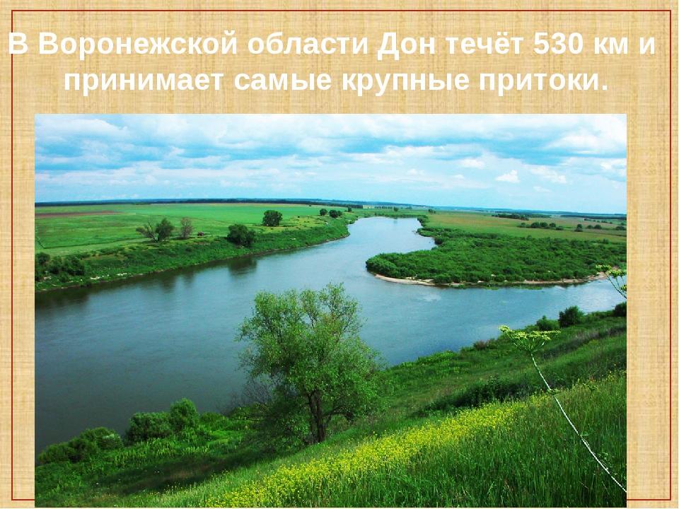 В Воронежской области Дон течёт 530 км и принимает самые крупные притоки.