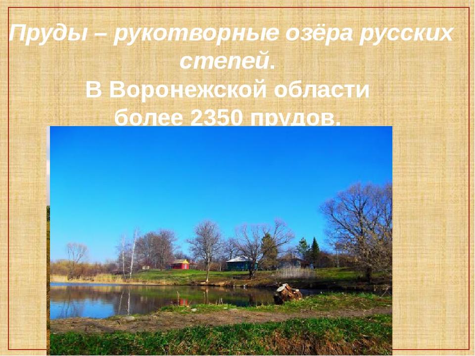 Пруды – рукотворные озёра русских степей. В Воронежской области более 2350 пр...