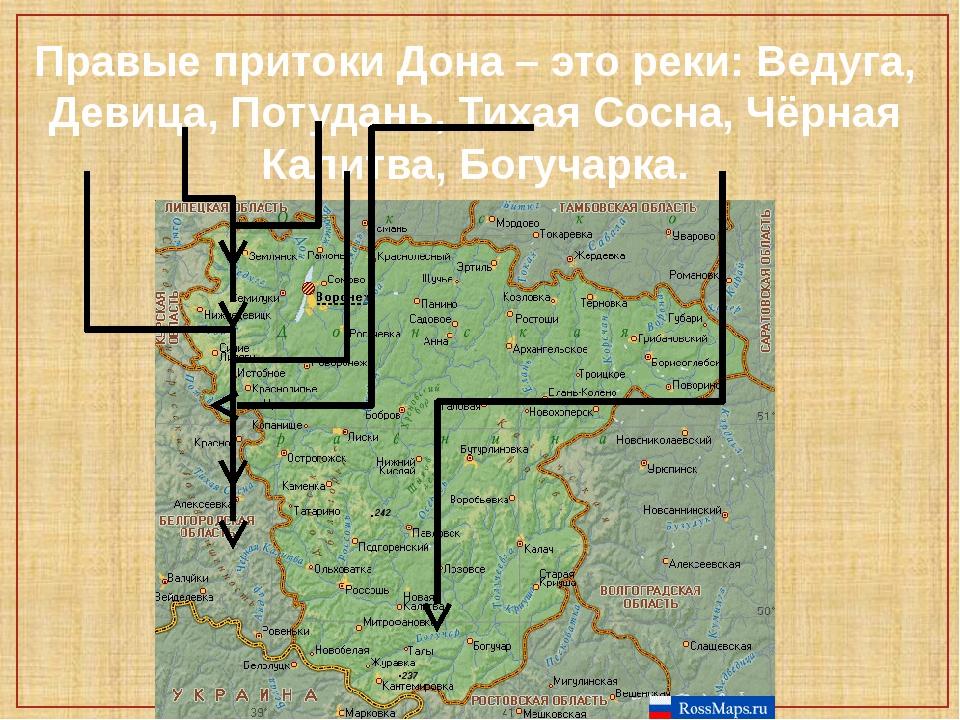 Правые притоки Дона – это реки: Ведуга, Девица, Потудань, Тихая Сосна, Чёрная...