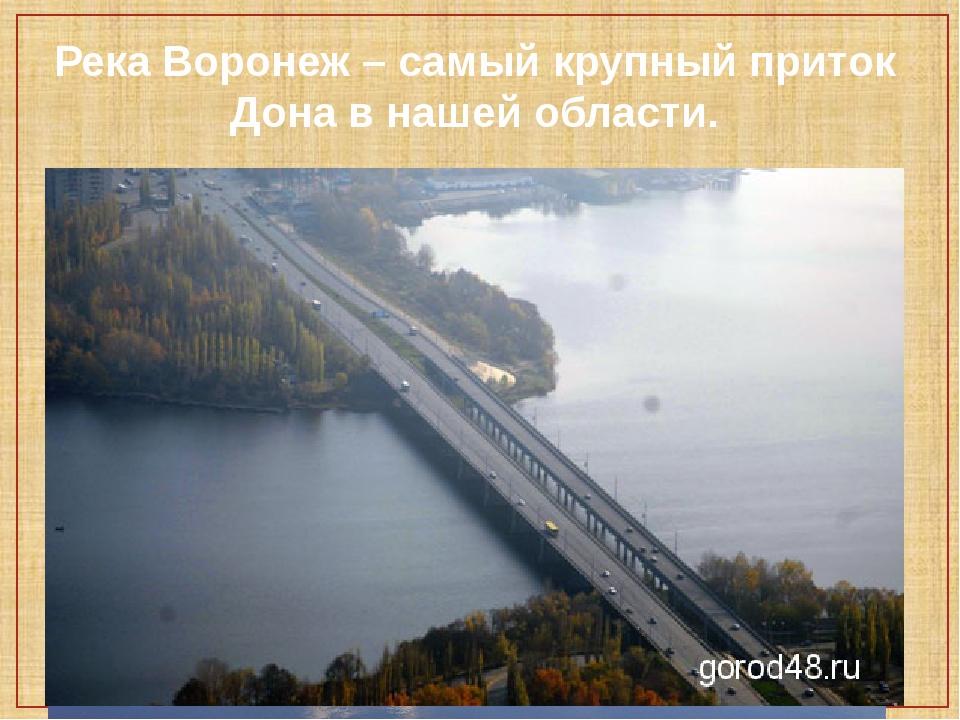 Река Воронеж – самый крупный приток Дона в нашей области.