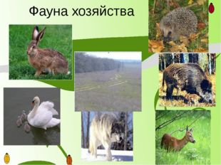 Фауна хозяйства