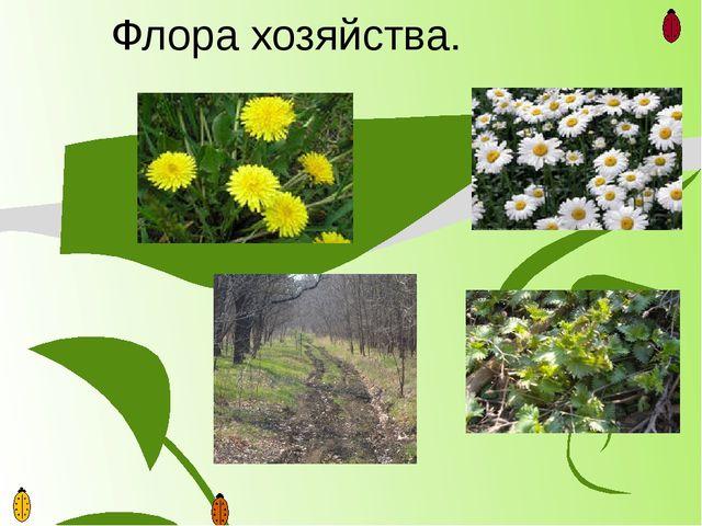 Флора хозяйства.