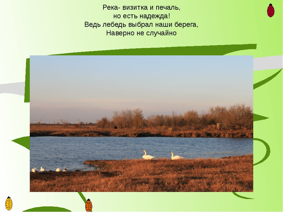 Река- визитка и печаль, но есть надежда! Ведь лебедь выбрал наши берега, Наве...