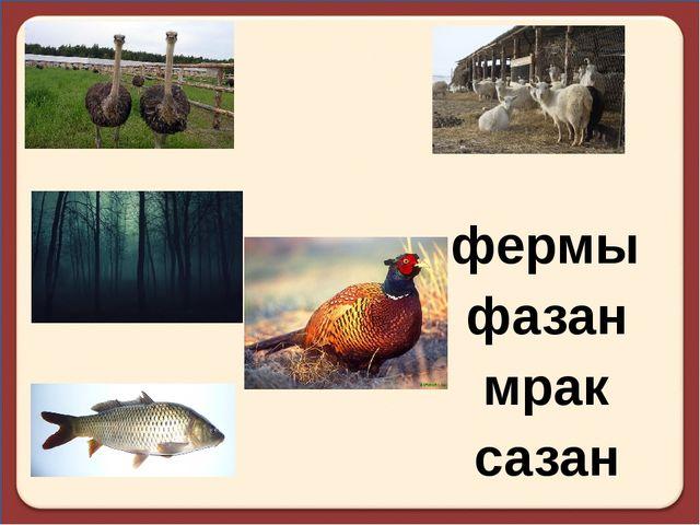 фермы фазан мрак сазан
