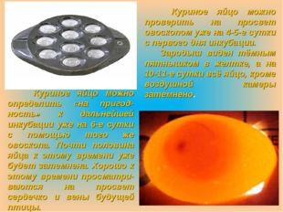 Куриное яйцо можно определить «на пригод-ность» к дальнейшей инкубации уже н