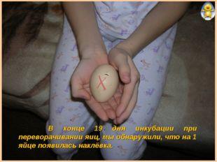 В конце 19 дня инкубации при переворачивании яиц, мы обнаружили, что на 1 яй