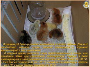 В первые 10 дней цыплята нуждаются в особой заботе. Для них необходимо тепло
