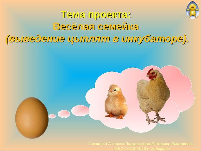 Тема проекта: Весёлая семейка (выведение цыплят в инкубаторе). Ученица 4 А кл...