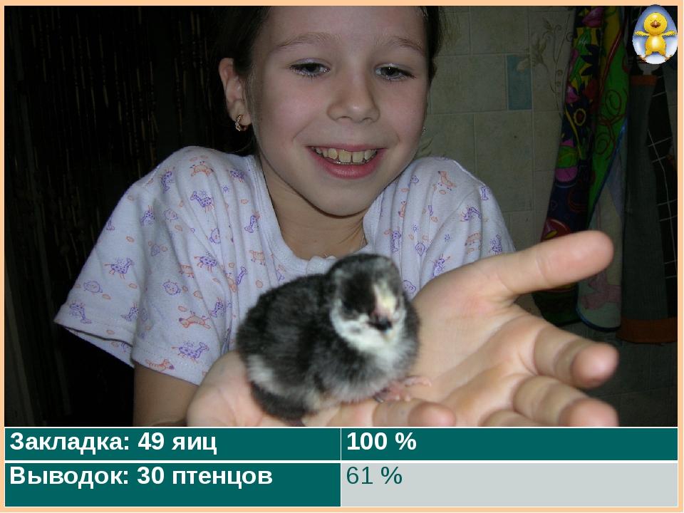 Закладка: 49 яиц100 % Выводок: 30 птенцов61 %