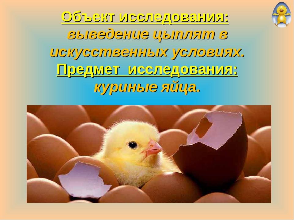 Объект исследования: выведение цыплят в искусственных условиях. Предмет иссл...