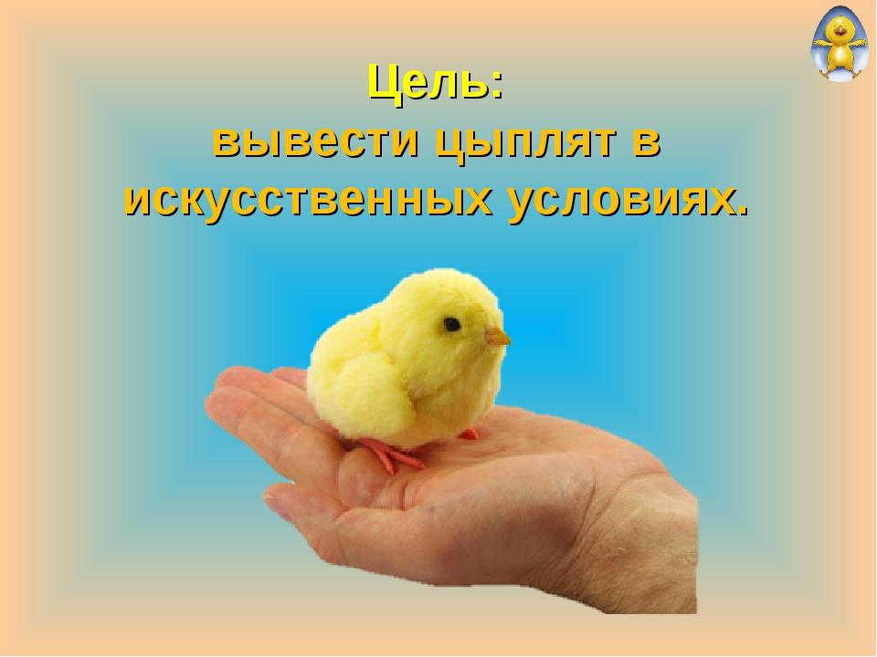 Цель: вывести цыплят в искусственных условиях.