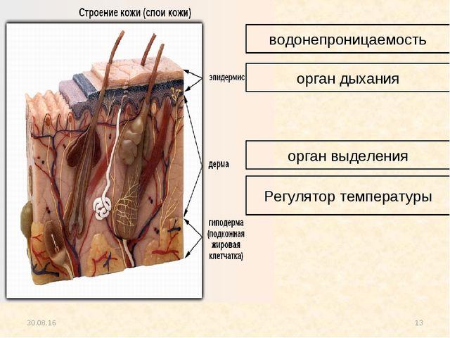 * * водонепроницаемость орган дыхания орган выделения Регулятор температуры