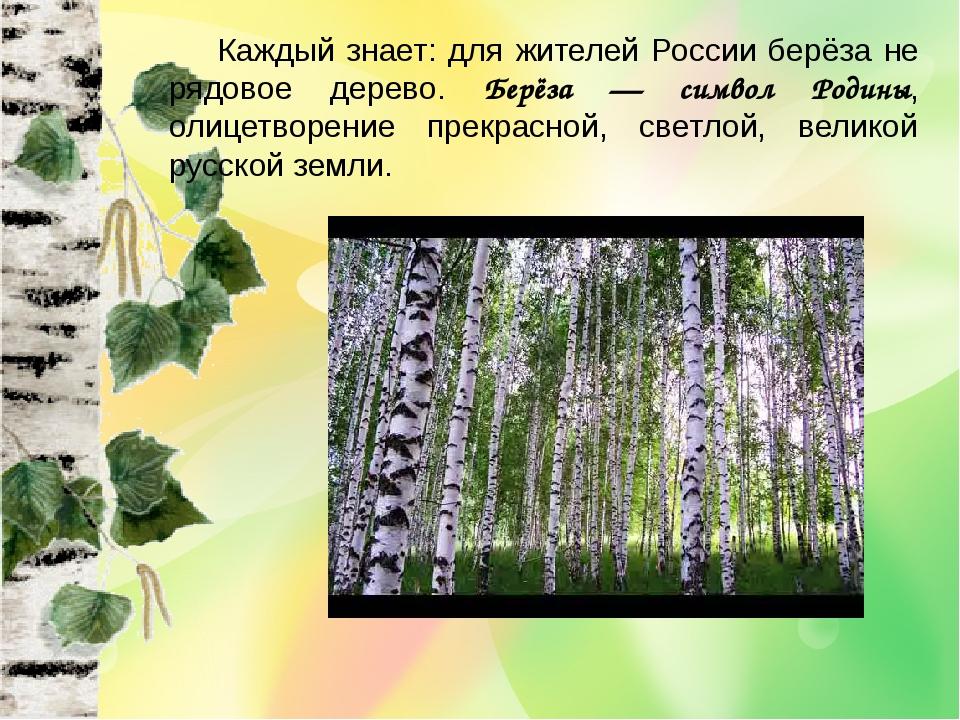 Каждый знает: для жителей России берёза не рядовое дерево. Берёза — символ...