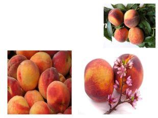 Am Gelände reifen Pfirsiche mit Streifen Rot und gelb bemalt.