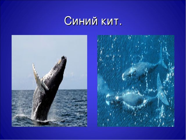Синий кит.