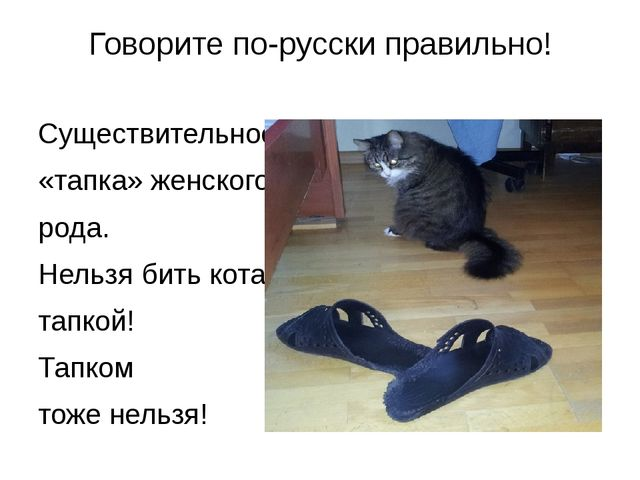 Говорите по-русски правильно! Существительное «тапка» женского рода. Нельзя б...