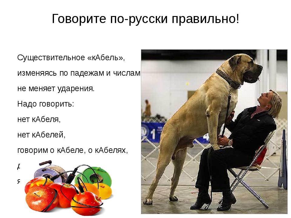 Говорите по-русски правильно! Существительное «кАбель», изменяясь по падежам...