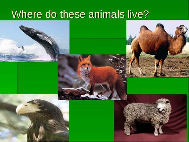 Where do these animals live?