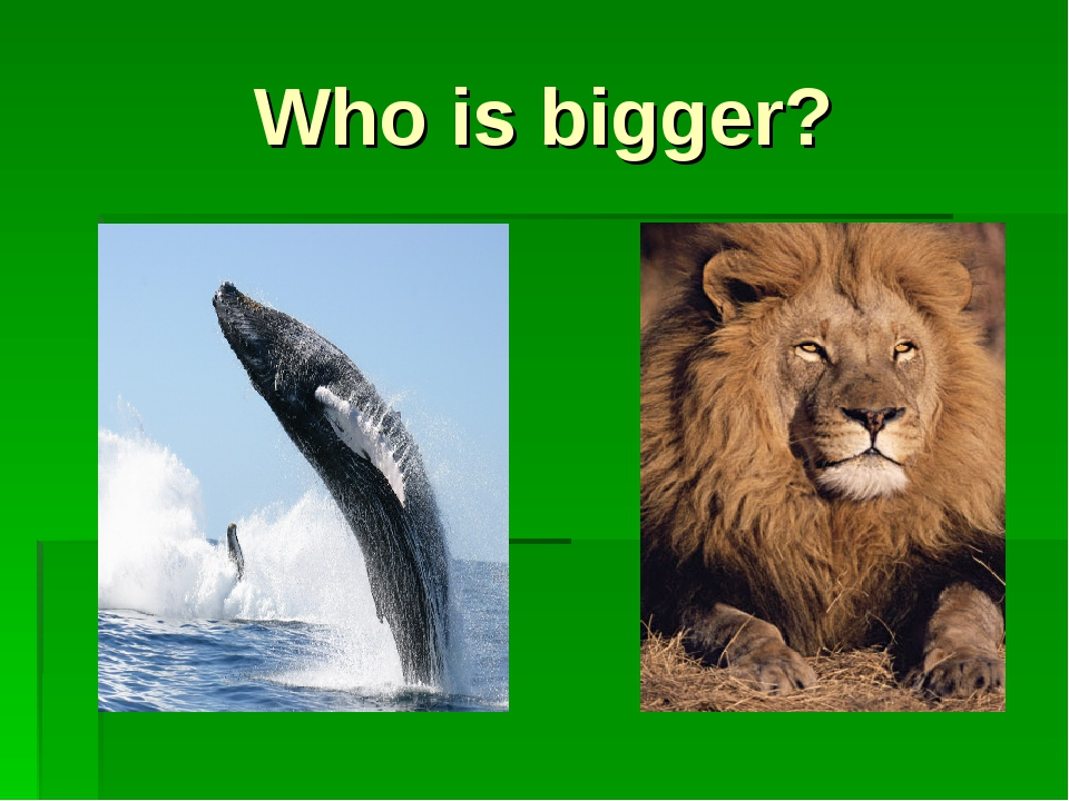 Who is bigger?