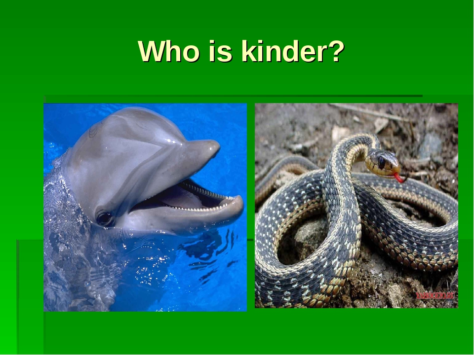 Who is kinder?