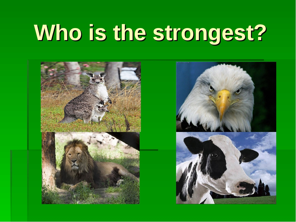 Who is the strongest?