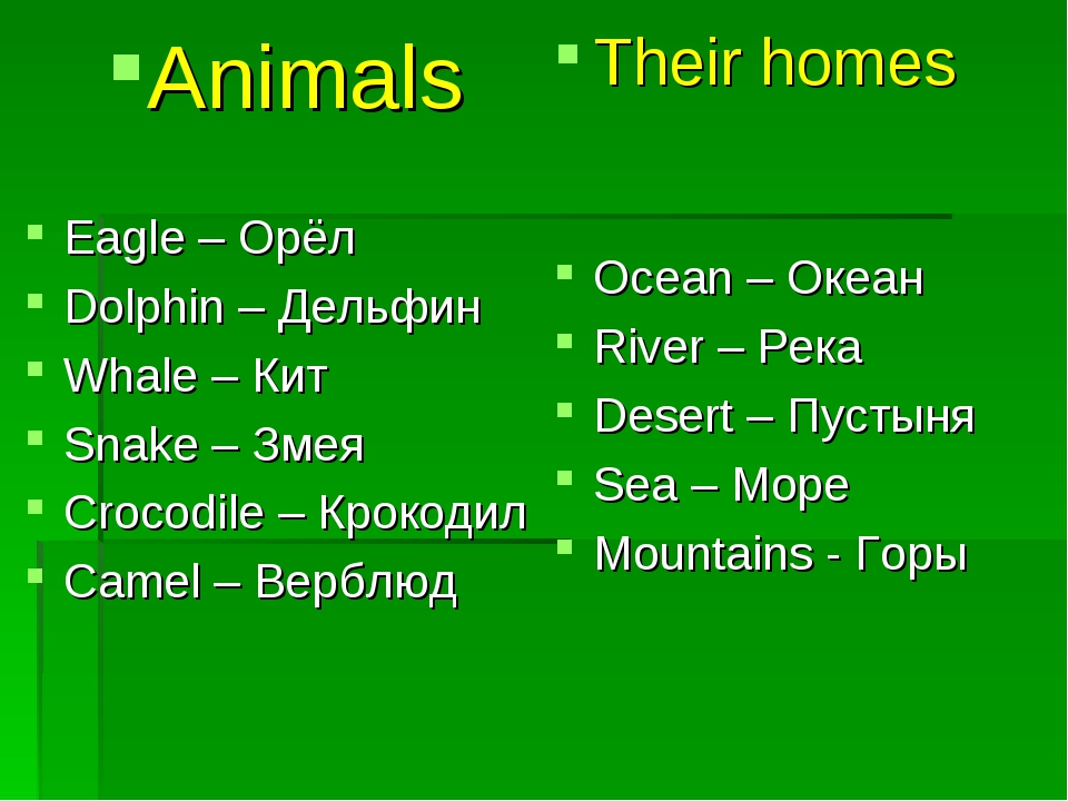 Animals Eagle – Орёл Dolphin – Дельфин Whale – Кит Snake – Змея Crocodile – К...