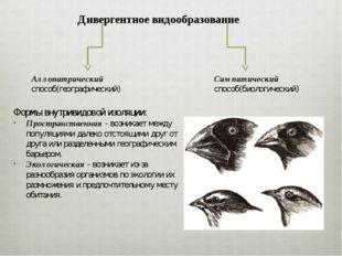 Дивергентное видообразование Аллопатрический способ(географический) Симпатиче