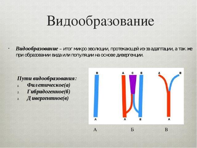 Видообразование Видообразование – итог микро эволюции, протекающей из-за адап...