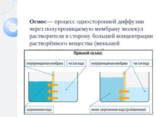 Осмос— процесс односторонней диффузии через полупроницаемую мембрану молекул
