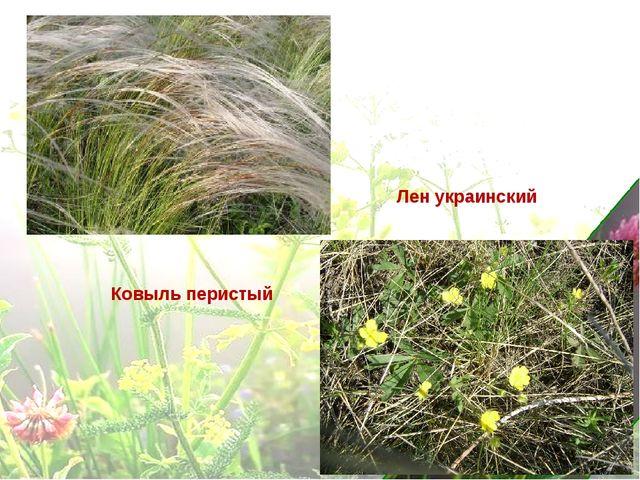 Ковыль перистый Лен украинский