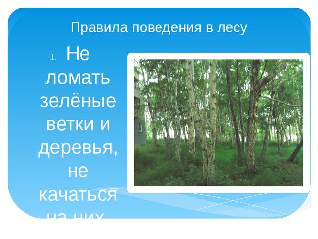 Правила поведения в лесу Не ломать зелёные ветки и деревья, не качаться на ни...