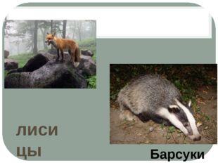 лисицы Барсуки