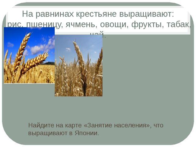 На равнинах крестьяне выращивают: рис, пшеницу, ячмень, овощи, фрукты, табак,...