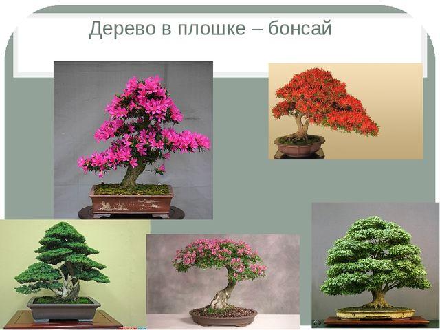 Дерево в плошке – бонсай