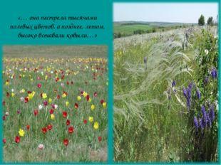 «… она пестрела тысячами полевых цветов, а позднее, летом, высоко вставали к