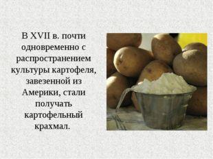В XVII в. почти одновременно с распространением культуры картофеля, завезенно