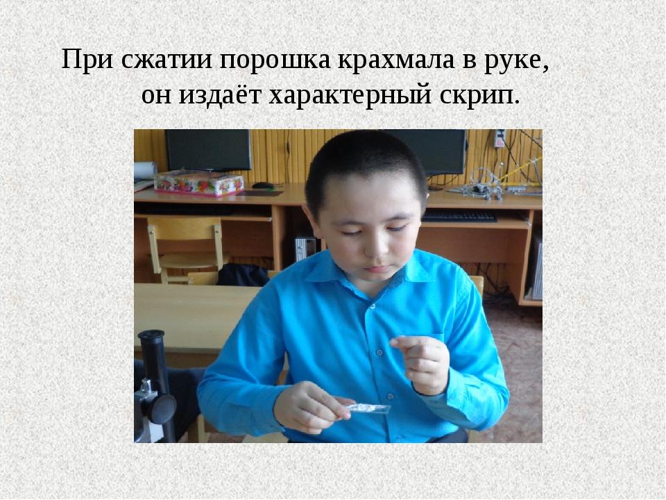 При сжатии порошка крахмала в руке, он издаёт характерный скрип.