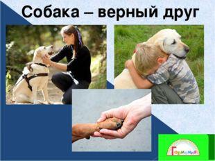 Собака – верный друг