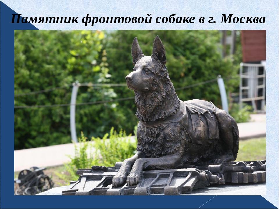 Памятник фронтовой собаке в г. Москва